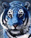 blue-tiger-small